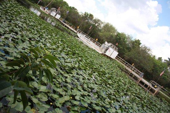 Everglades Safari Park: Entrée
