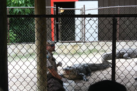 Everglades Safari Park: Show