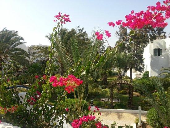 Fiesta Beach Club Djerba : jardin de l'hotel