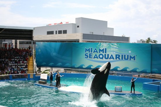 Miami Seaquarium : Spectacle