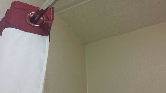 Red Roof Inn Columbia East - Ft Jackson : Mold on ceiling