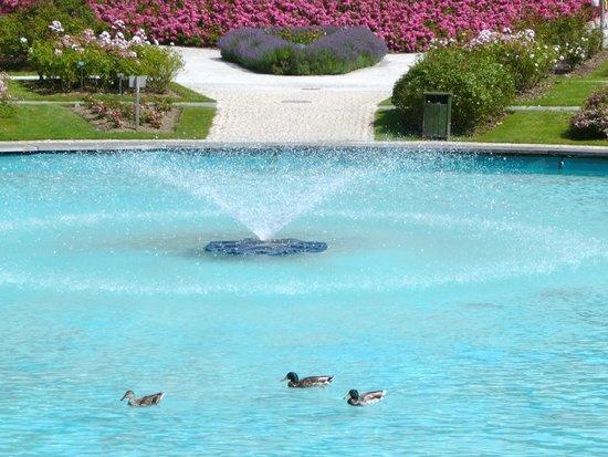 La Colline aux Oiseaux: le bassin