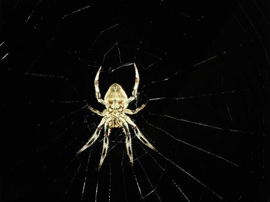 Clearwater Island Lodge: Spider