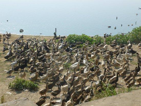 Puente U Bein: Ein Paradies für die Enten!