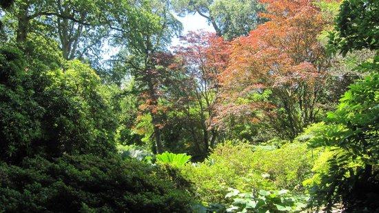Exbury Gardens & Steam Railway : Amazing Trees