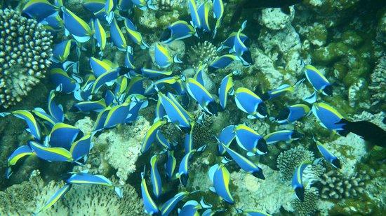 Adaaran Select Meedhupparu : snorkel trip