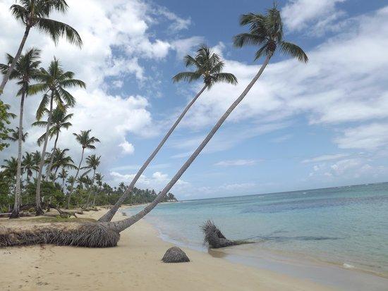 Grand Bahia Principe El Portillo : Paradise beach