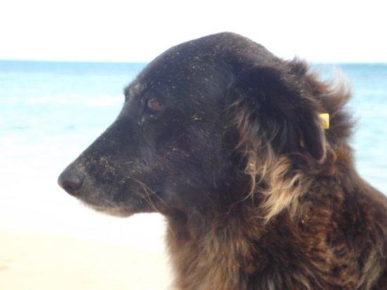 Grand Bahia Principe El Portillo : Our friend Rosetta