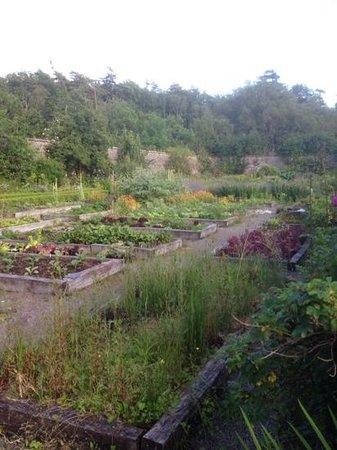 Applecross Walled Garden: the beds
