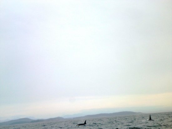 Western Prince Whale Watching : Whales in the water