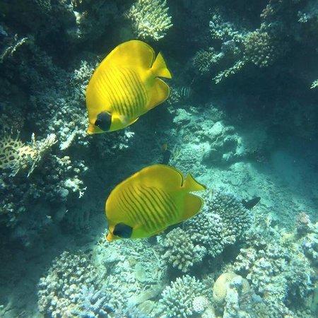 Brayka Bay Reef Resort: b