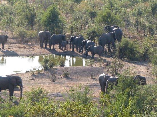 Victoria Falls Safari Lodge: Elephant at the waterhole