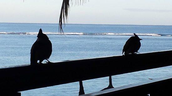 Le Sakoa Hotel : visiteurs sur la terrasse le matin