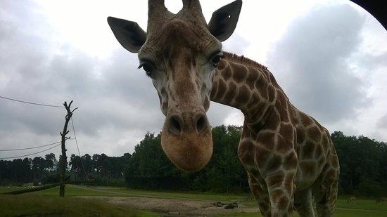 Serengeti-Park Hodenhagen: :-)