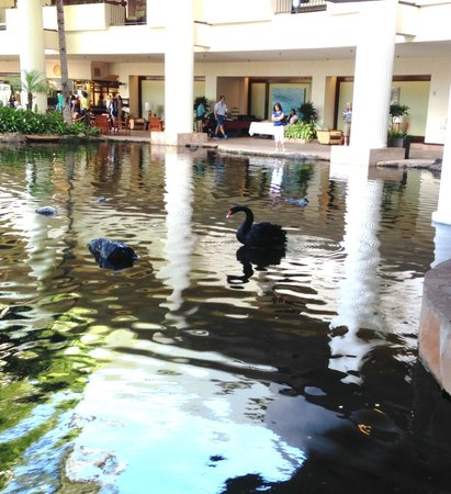 The Westin Maui Resort & Spa: Black swan