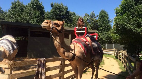 Zoo Knoxville: Monroe on a camel named Ty