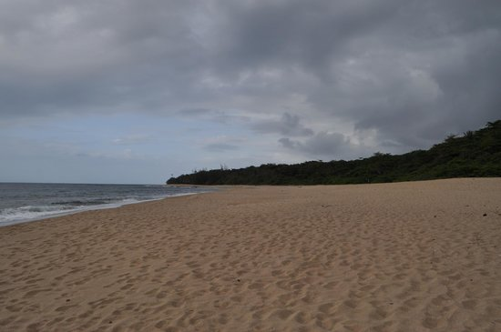 Tropical Trail Rides - Isabela: nice beach