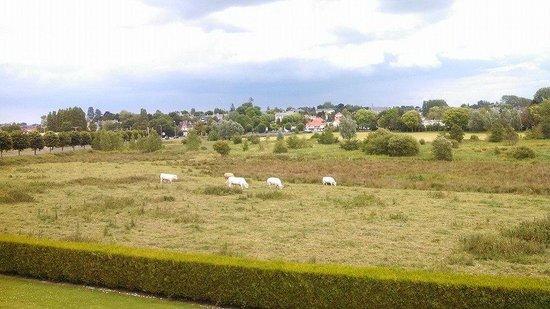 Campanile De Bayeux : Cows and birds and open air a contrast to Paris