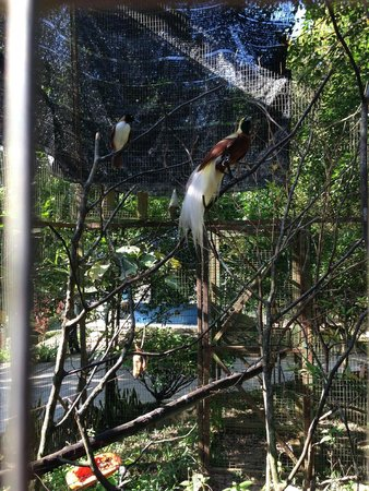 Lok Kawi Wildlife Park: birds