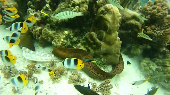 Jardin de Corail : Eel