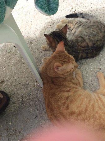 Moorea Mahana Tours : The island kittens