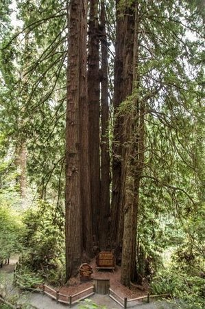 Trees of Mystery: Cathedral Trees
