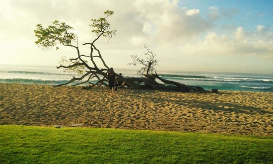Hilton Bali Resort : my wife at the beach with trees, so beautiful view