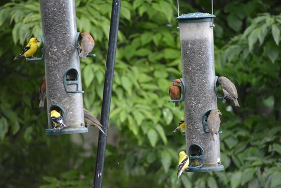 Snowbird Mountain Lodge: Several guests watched the birds after dinner