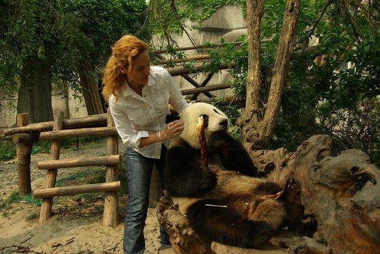 Giant Panda Breeding Research Base (Xiongmao Jidi): Amazing!!!!!