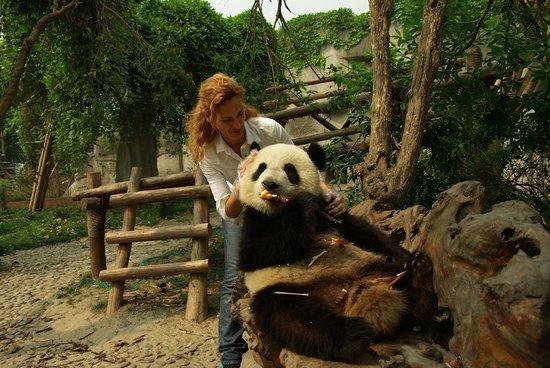 Giant Panda Breeding Research Base (Xiongmao Jidi): Adorable!!!