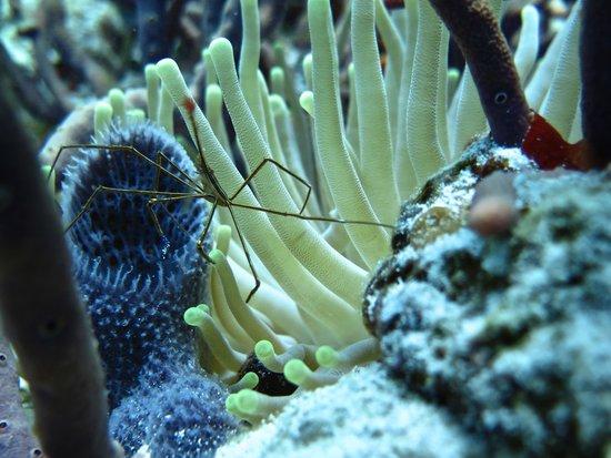 Cozumel Palace: Diving with Aqua Safari