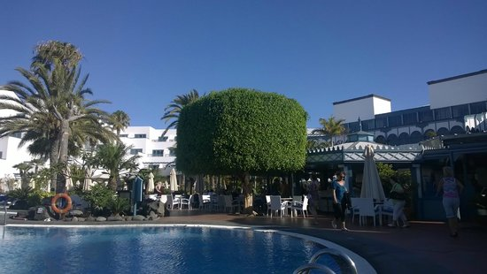 Seaside Los Jameos Playa: Tree