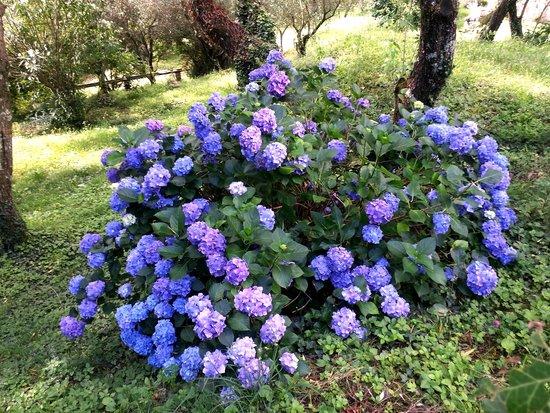 Agriturismo Saudon: jardin