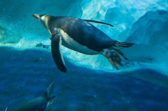 ... - Picture of National Sea Life Centre, Birmingham - TripAdvisor