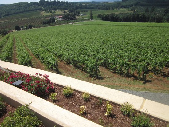 Willamette Valley Vineyards: Looking out over the vineyard
