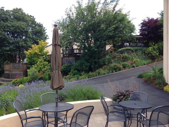 Willamette Valley Vineyards: Looking up to the deck/patio
