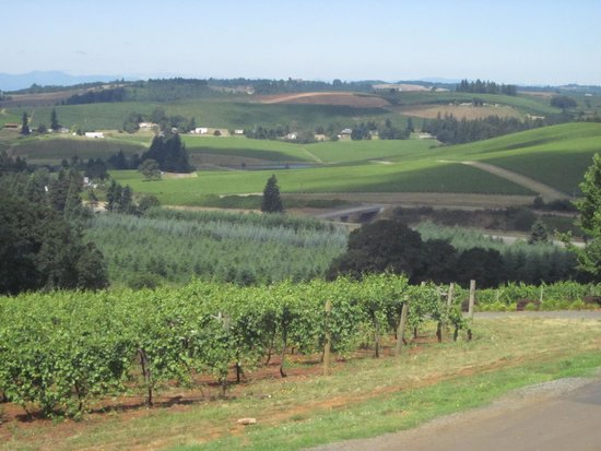 Willamette Valley Vineyards: Looking out from the patio over the vineyard