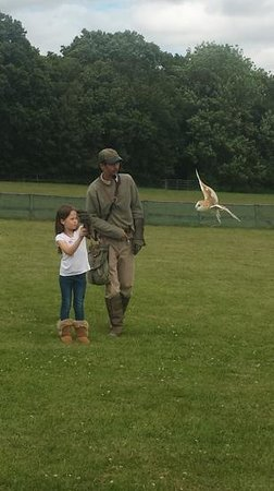 Rare Breeds Centre: my 8 year olds birthday falconry experience day