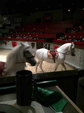 Medieval Times : Beautiful horses