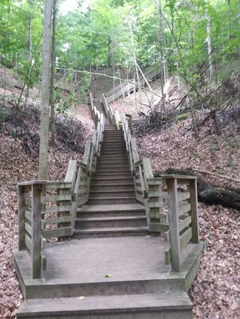 Sanctuary Woods: The first set of stairs. Not bad. Well taken care of and landings to rest of needed.
