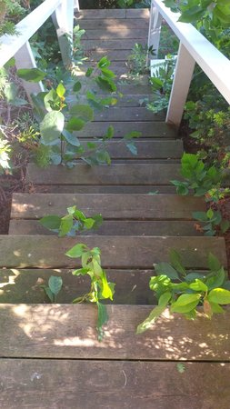 The Briars : The rickety old, overgrown stairs to the waterside grass patch; a little property maintenance wo