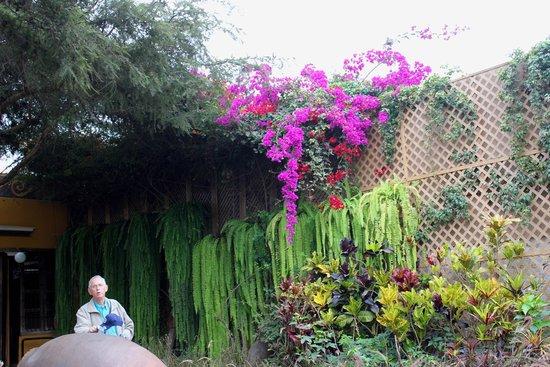 Huaca Pucllana : Some of the beautiful plants