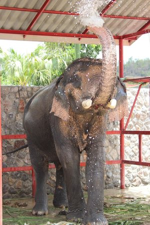 Hutsadin Elephant Foundation : Playing in the water