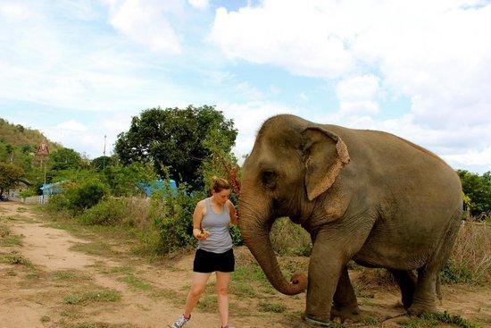 Hutsadin Elephant Foundation: Walking the elephant