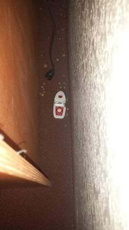 Good Nite Inn Fremont: Remaining mouse trap and refuse after dead mouse was removed