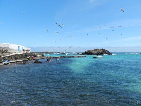 Isla de Lobos: puerto pescadores