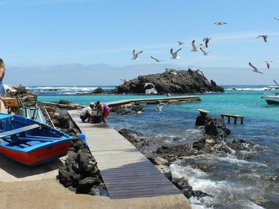 Isla de Lobos: limpiando pescado