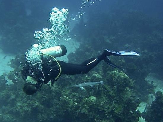 Tiamo Resort : awesome dive staff