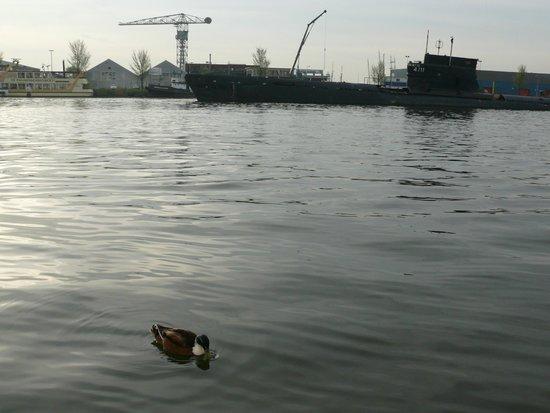 Amstel Botel: Уточка приплывала к нам по утрам на завтрак)