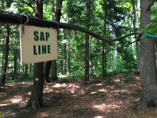 Morse Farm Maple Sugarworks: Sap line